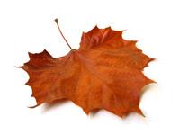 kurumuş yaprak